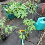 Organic Garden Centre - Easter Newsletter