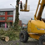 Tree Felling at Lakeview Estate