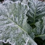 winter-veg-patch1