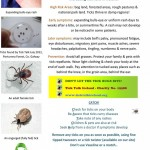 Lyme Disease—Our Story