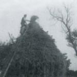 paddy-moran-lakeview-1960