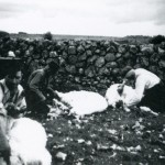 shearing-sheep-carnmore-1950