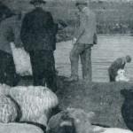 washing-sheep-waterdale-may1956
