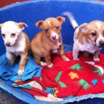 Charity Forced to Close after Record Level of Abandoned Dogs