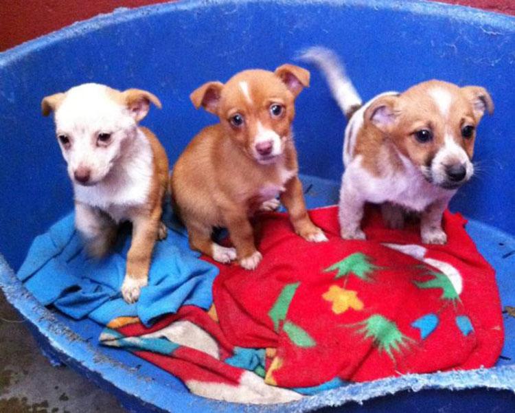 x4-MADRA-puppies