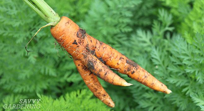 Photo via SavvyGardening.com