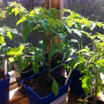GIY (Grow It Yourself) March 2015