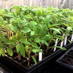 Spring It On! – Grow It Yourself (GIY)