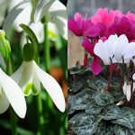 Brighten Up Your Garden & Patio In January – with Paraic Horkan