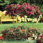 Roses: Planting, Growing And Pruning Roses - by Paraic Horkan