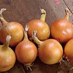 Onion Sets - by Klaus Laitenberger
