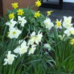 Gardening with Anne McKeon