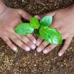 Gardening with Paraic Horkan