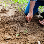 Growers Calendar - G.I.Y (Grow It Yourself)